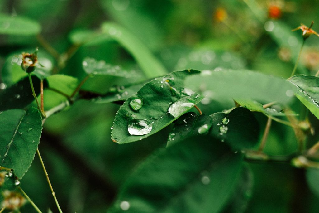 Photo of a raindrop on a green leaf